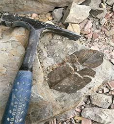 martillo geológico al lado de un fósil